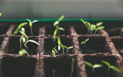 Jaka czeka nas przyszłość żywieniowa?