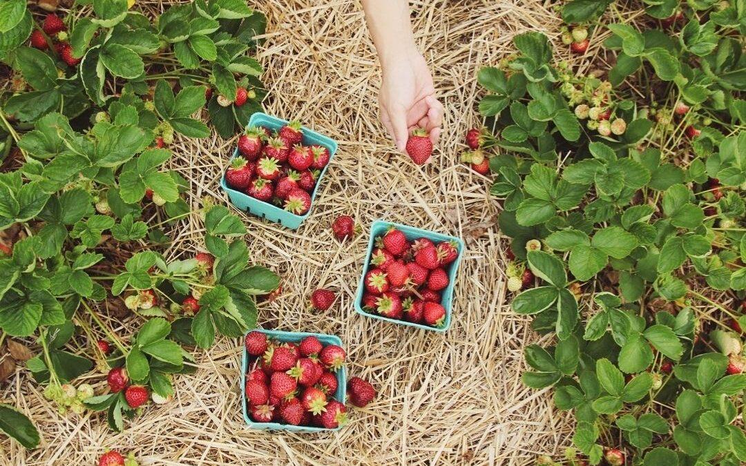 Owoce – panaceum na stres i choroby