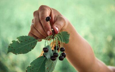 8 zasad zdrowego żywienia wg. prof T. Colina Campbella