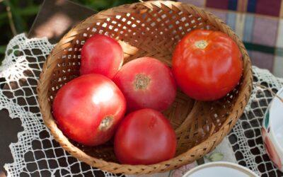 Pomidory – sezonowy niezbędnik cz.2